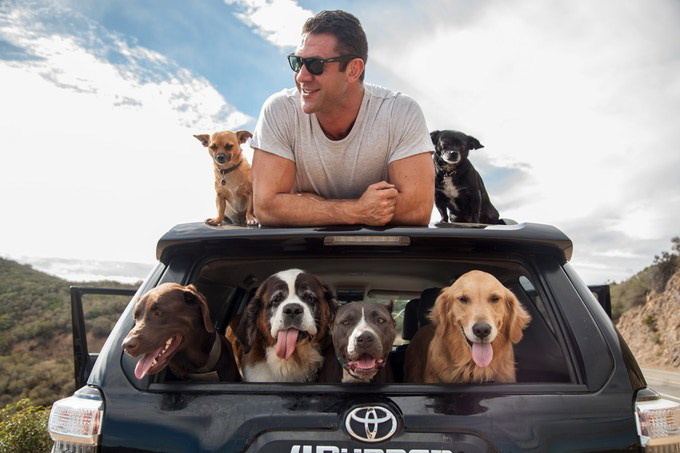 Asher house dogs in toyota